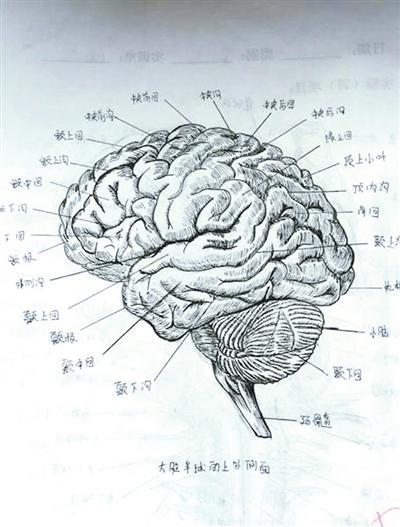 太逼真!大学生手绘人体解剖图走红